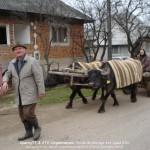 Attelages Roumains Yack 3 (Copier)