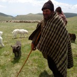 bergers des carpates
