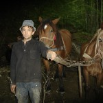 Atelage chevaux Roumain